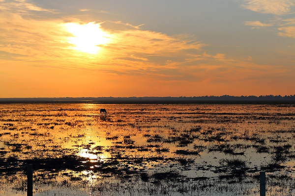 sunset over Hinojos Marshes