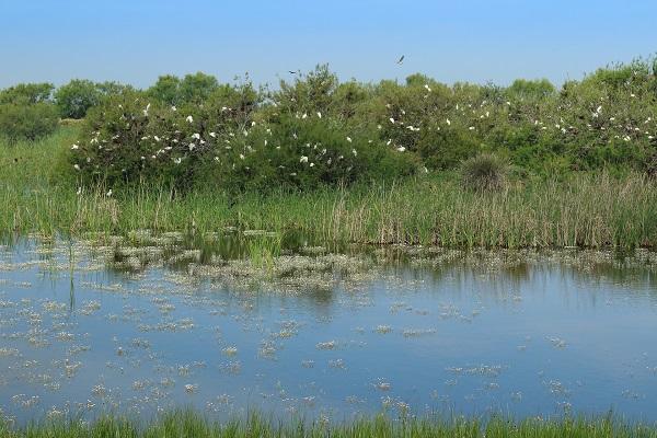 tarajes llenos de nidos en la colonia de jose a.valverde