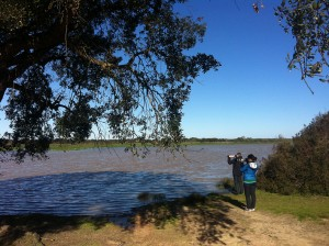 Marisma Inundada Donana