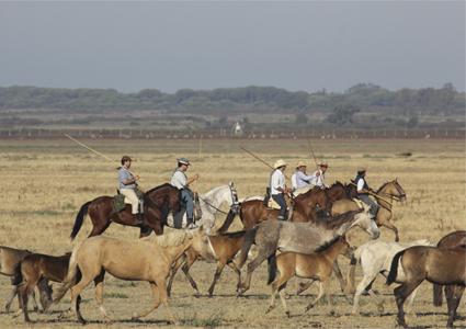 ganaderos conduciendo las yeguas