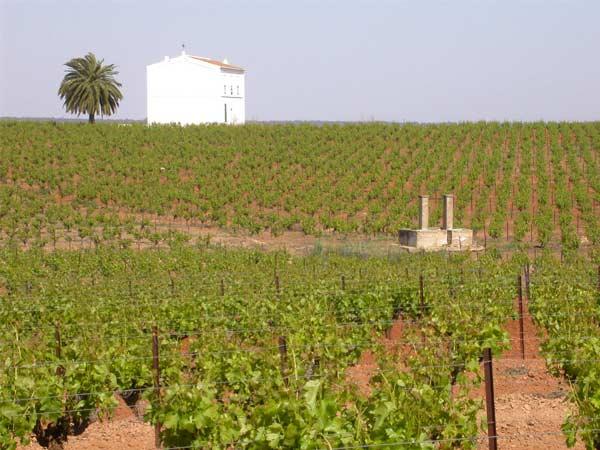 pozo y casa entre las viñas
