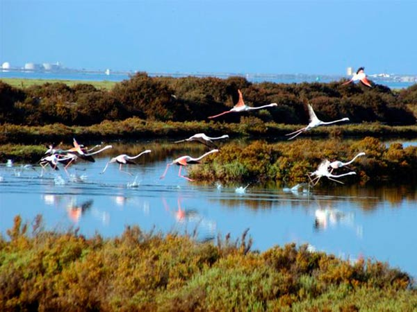 group of flamingos flying over the marshes