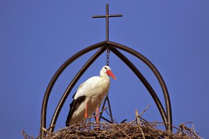 cigüeña en su nido bajo una cruz