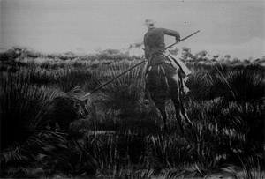 The king Alfonso XIII hunting a wild boar in Doñana