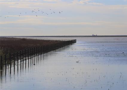 panorámica de la marisma de doñana en invierno