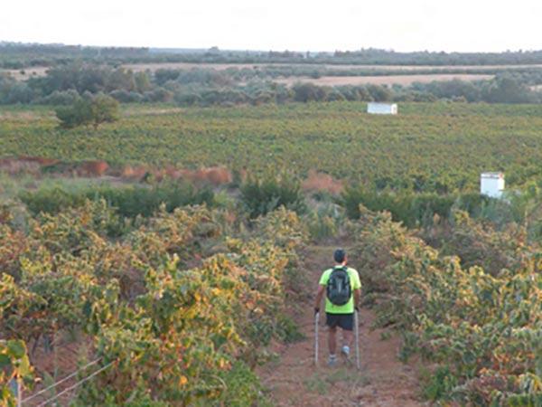 paseando por los viñedos