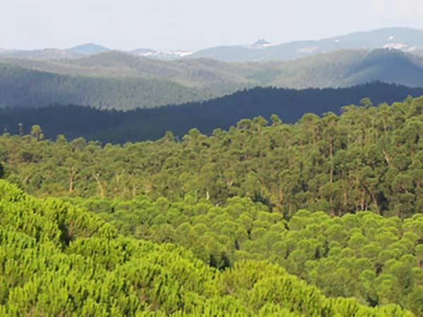 panorámica de Sierra Pelada