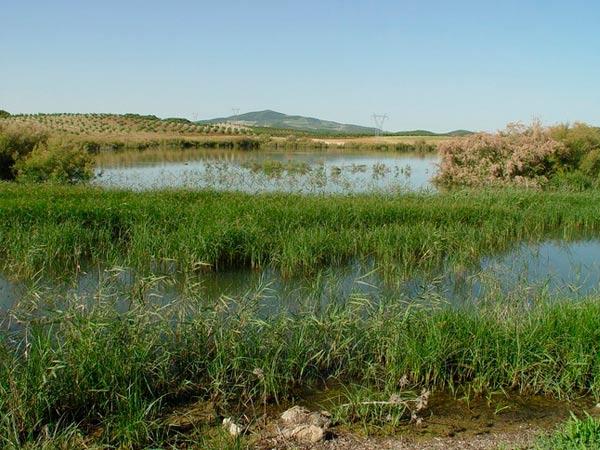 Lagunas de Espera