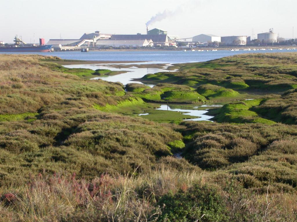 Río Odiel con las industrias del polo químico de fondo
